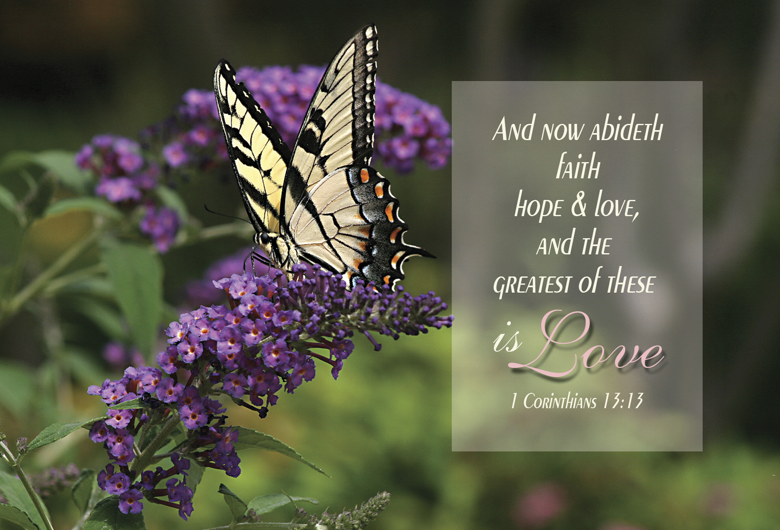 Simple Wallpaper Horse Bible Verse - greatest-love-bttrfly-bp  Picture_152118.jpg