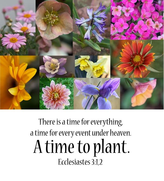 Ecclesiastes 3:1,2
