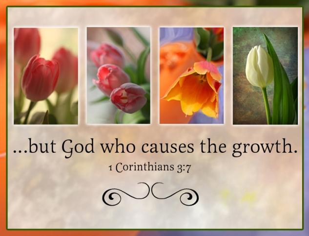 1 Corinthians 3:7